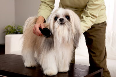 Longer coats only keep a dog warmer if they're properly groomed. Matted fur traps moisture, which actually makes a dog much colder in winter.