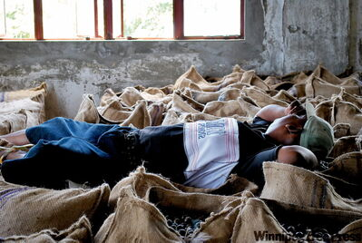 A sleepy Grenadian cat-napping on sack of nutmeg at Gouyave Nutmeg Processing Station.