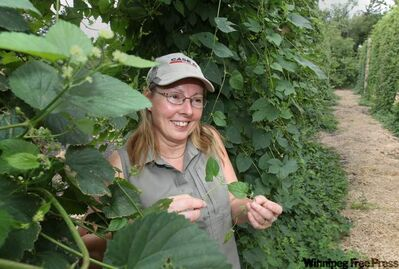 Sandra Gowan grows about 60 hops plants for the hobby beer market in Manitoba.