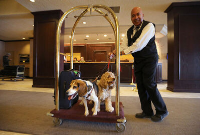 Delta Winnipeg bellman Walter Dorrington gives Finnegan and Sadie a lift on a hotel luggage cart.