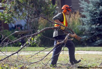 A city forestry crew works to remove a diseased elm from Wordsworth Way.