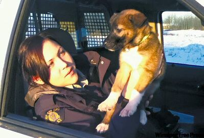 Shamattawa Mountie Gennifer Furkalo has spent $2,000 of her own money feeding stray dogs.
