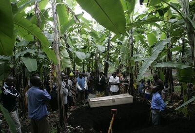 FILE - In this Nov. 18, 2008 file photo, displaced people gather around the coffin containing the body of Rebecca Yalala, who died the day before of complications from diabetes and malaria, as they prepare to bury her in a grove of banana trees near a camp for displaced people, in Bulengo, near Goma, eastern Congo. The fight against malaria is slowing down with a dramatic drop in the number of protective bednets distributed last year, even as health officials insist they will try to meet their ambitious target of eliminating deaths from the parasitic disease by the end of 2015. (AP Photo/Karel Prinsloo, File)