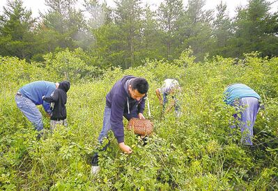 Vanda Fleury photo