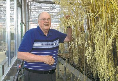 Plant scientist Vernon Burrows with his latest yield of oats at the Central Experimental Farm in Ottawa.