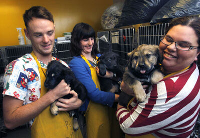 Winnipeg Humane Society staffers show off with three of the 17 puppies up for adoption. Benjamin MacLeod holds Sedona, (from left) Laina Hughes cuddles Lenny and Kristina Graham snuggles Sully.