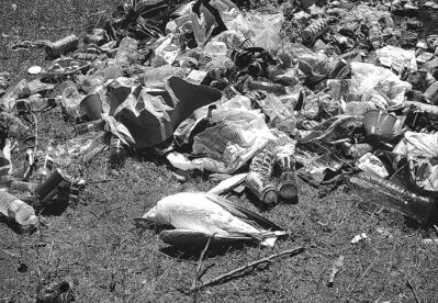 A dead seagull is seen next to a pile of garbage near Beaconia Beach.