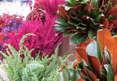 The colourful assortment of fresh and faux materials at your local garden centre for decorating your front door and winter containers will have you feeling like a kid in a candy store. Shown: fresh Ming pine, magnolia leaves sporting coppery brown undersides, and stem accents in the hottest colours of the season.