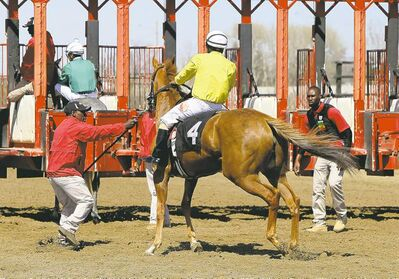 Gate crew members work to get horse Grace O'Malley into the starting gate before the fourth race at Assiniboia Downs on May 12.