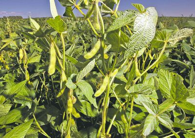 Soybean production is expected to reach 2013 levels.