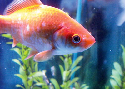 Keeping tropical fish is a rewarding pastime that doesn't take as much time and effort as you might think.