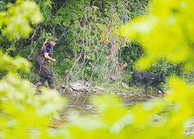 Aaron Vincent Elkaim / The Canadian PressA police dog searches a riverbank in Mississauga, Ont., Thursday.