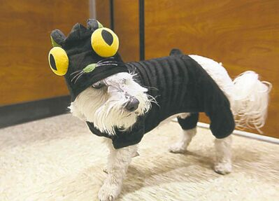 Mr. X cleverly disguised as a bug-eyed cat.