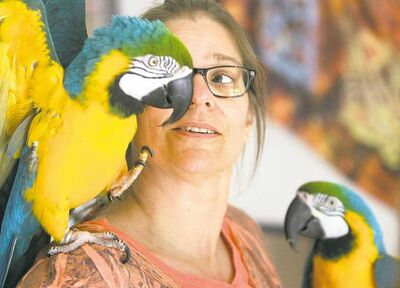 Trevor Hagan / Winnipeg Free PressShura (left) with her blue and gold Macaw parrots Kia and Andy.