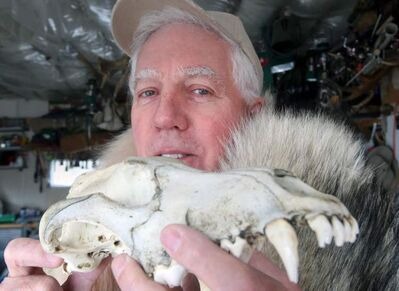 Winnipeg wildlife biologist Vince Crichton dismisses Farly Mowat's book, Never Cry Wolf, as 'outright preposterous.'