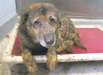 A dog seized from the Gull Lake property.