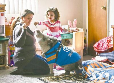 Danielle Forgione and her daughter, Olivia, 3, play with Petey, the family's pet pig in Queens, New York.