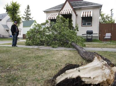 Jorge Alvarez (left) watches as a city worker cleans up a tree that landed on his house on Patrick Street Saturday afternoon after intense winds blew it down. The tree came down directly into his front door.