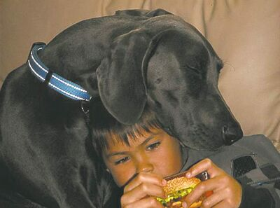 ManixMy grandson, Kyle, is so involved in his  i-Pod and not moving so his buddy  Manix, who is an 11-month-old Weimaraner, fell asleep.� Ron Svienson