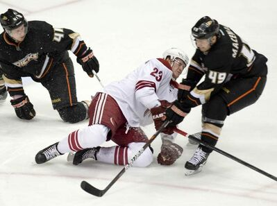 Maxime Macenauer plays at the Honda Center in Anaheim, California, on Wednesday, December 14, 2011.