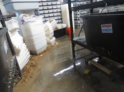 This Dec. 2012 photo provided by People for Ethical Treatment of Animals (PETA) shows flooding rat enclosures and spilling water onto a facility floor where rats were warehoused like shoes in rack after rack of tiny tubs, at a breeding center in Lake Elsinore, Calif. Riverside County authorities said Monday, July 22, 2013 that two men have been charged with 106 counts of felony animal cruelty for the way they treated nearly 20,000 rats and reptiles found diseased, dying or dead. (AP Photo/PETA)