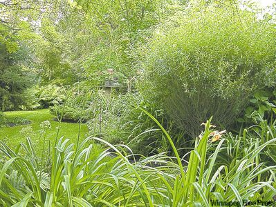 Stroll through lush greenery on the WSO Daytime Garden Tour.