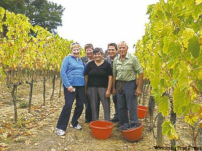 The Giannetti family, owners of La Fornace Winery in Tuscany, harvest Sangiovese grapes.