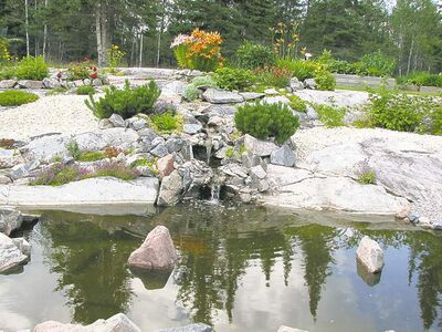 Water features provide a habitat for visiting wildlife. Incorporating native plant species into your garden design may help to attract more wildlife.