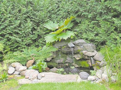 Even the smallest of ponds, such as this one in a Steinbach area garden which is shaded by a stunning ornamental rhubarb, can suffer from excessive nutrients and algae blooms. Use environmentally friendly solutions such as beneficial bacteria that are safe for birds, pets and humans.
