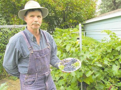 Carman resident Murray Dudgeon grows grapes both in his backyard and on his farm, yielding up to 54 litres of homemade wine. For small quantities a sophisticated press is not required. Dudgeon has had success with a pot and potato masher.