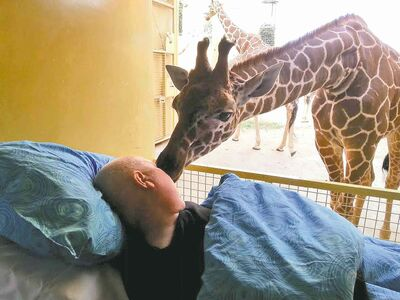 A giraffe gave a lick to a dying man who asked as a last wish to be taken to Blijdorp Zoo in Rotterdam, Netherlands, where he had done odd jobs for 25 years.  A giraffe at Rotterdam�s Blijdorp Zoo nuzzles Mario Eijs. Eijs worked at the zoo 25 years and is disabled by a brain tumour. His dying wish was for a giraffe kiss.