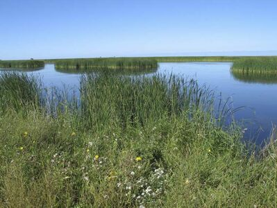 Manitoba wetlands: Delta Marsh threatened by invasive carp species