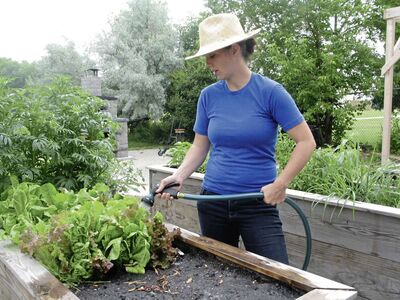 The centre's garden and food skills programmer Stephanie Fulford waters some lettuce.