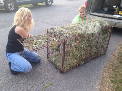 Toni Gramiak (left) and volunteer Sandy Brown prepare a trap to try to capture a cat with a bug trap stuck to his head. Butterscotch (in image at top) has received attention far and wide.