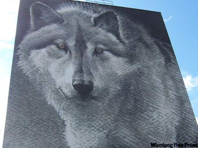 Wolf mural in Thompson by Winnipeg artist Charles Johnston from a Robert Bateman painting. It's Canada's largest photo-real mural and part of Thompson's Spirit Way trail.