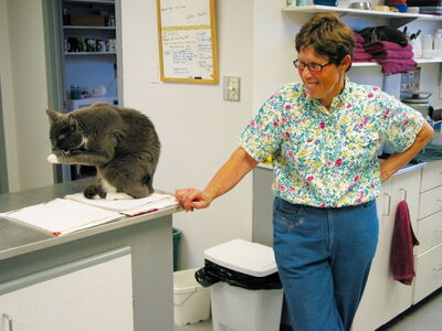 St. Francois Animal Hospital veterinarian Betty Hughes stands next to one of the clinic's resident cats.