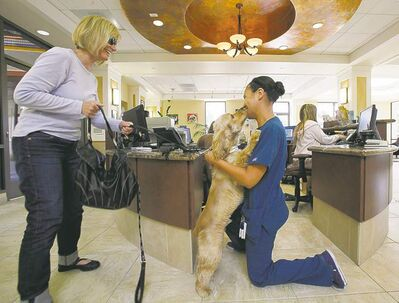 REED SAXON / THE ASSOCIATED PRESSBoarding is a popular option, but available spaces at kennels and veterinarians� offices fill up early.