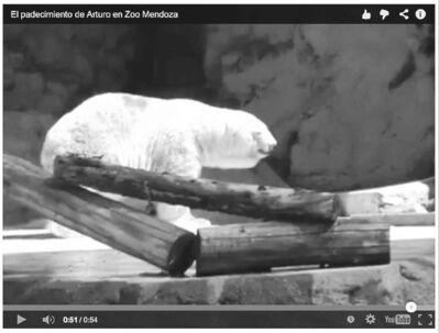 A YouTube video posted in the spring prompted calls for international intervention to save Arturo.
