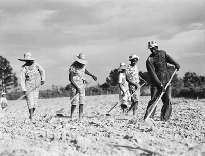 A cropper family chops weeds from cotton near White Plains, Ga., in 1941.