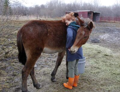 Monty the mule gives Karin Schlaikjar a hug on her farm near Birds Hill Park, just like she's been doing literally and figuratively for area animals for decades.