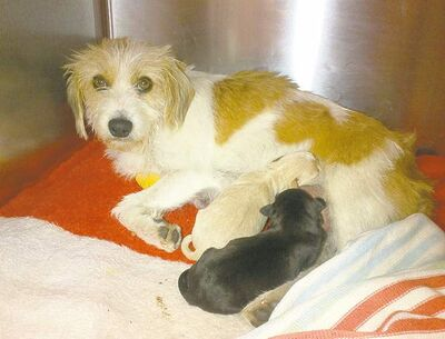 Tilley nurses her two pups after her emergency C-section Saturday.