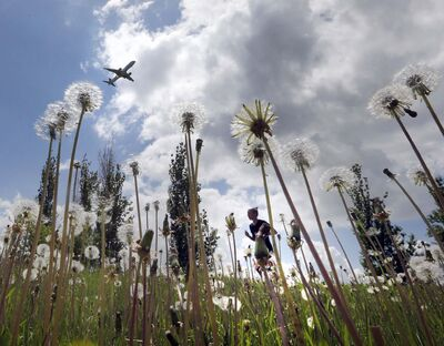 KEN GIGLIOTTI / WINNIPEG FREE PRESS FILES</p><p>People may find dandelions unsightly, but the long-term effects of cosmetic pesticides can harm more than a lawn&#39;s aesthetics.</p>