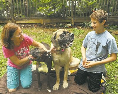Who's a good puppy? Cheryl Trudil, left, with her dog Monty, recruited her neighbour  Ethan Rosman's dog Hazel, an English Mastiff, to donate blood for other pets.