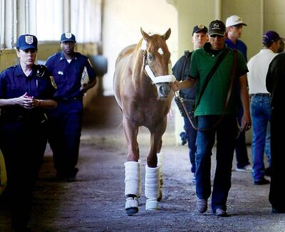 Seth Wenig / the associated press archivesKentucky Derby and Preakness winner I�ll Have Another at his Belmont digs.