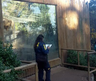 A PDI Chile officer investigates at the zoo where a man was attacked by lions.