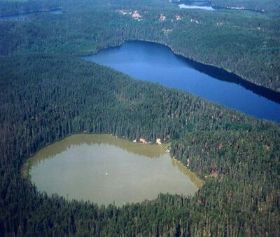 The Experimental Lakes Area near Kenora, Ontario.