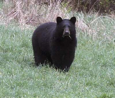 Feeding bears reduces the bears' fear of people and poses a public risk, says Provincial Court Judge Tim Preston.