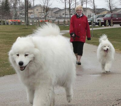 Donna Henry, spokeswoman for WINDOG, Winnipeg Network of Dog Owner Groups, with her dogs Hudson, foreground, and Terra in the  Kilcona Park Dog Park.