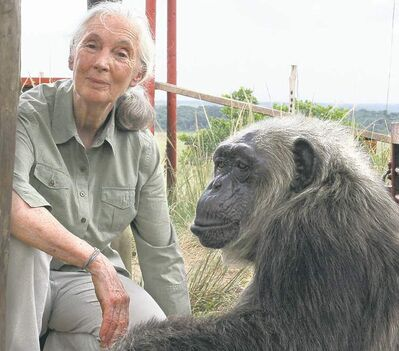 Fernando Turmo / Jane Goodall Institute