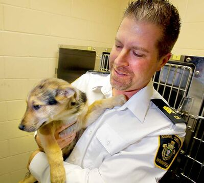 Leland Gordon, chief operating officer of the animal services agency, with a friend at the Logan pound.